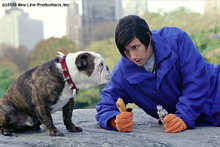 Sandler und Hund